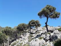 Uma árvore na parte superior da montanha Imagem de Stock