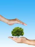 Uma árvore nas mãos humanas no fundo azul fotos de stock royalty free