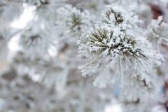 Uma árvore nevado Imagens de Stock