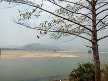 Uma árvore no banco do rio Godavari Fotos de Stock