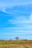 Uma árvore no campo Fotos de Stock Royalty Free