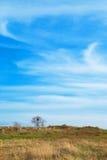 Uma árvore no campo Imagem de Stock Royalty Free