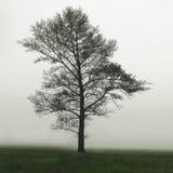 Uma árvore no campo na névoa Uma única árvore só em um campo de exploração agrícola nevoento no embaçamento e na névoa  imagens de stock royalty free