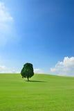 Uma árvore no campo verde Imagem de Stock