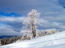 Uma árvore no inverno Imagens de Stock