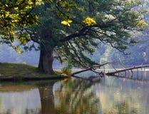 Uma árvore no lago selvagem. fotografia de stock