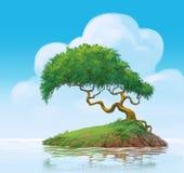 Uma árvore no pântano Foto de Stock