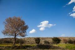 Uma árvore nos campos foto de stock royalty free
