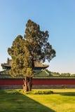 Uma árvore, o templo dos céus Imagem de Stock Royalty Free