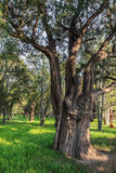 Uma árvore, o templo dos céus Imagens de Stock