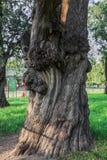 Uma árvore, o templo dos céus Imagem de Stock