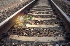 Uma árvore pequena vegeta entre a estrada de ferro, efeito adicionado, efeito da luz adicionado, imagem filtrada do alargamento,  fotos de stock royalty free