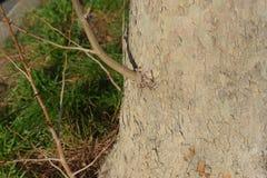 Uma árvore plana Imagens de Stock