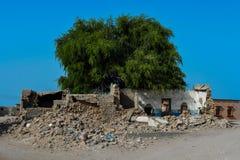 Uma árvore que cresce fora de uma casa arruinada fotografia de stock royalty free