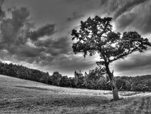 Uma árvore que obstrui o sol Foto de Stock Royalty Free