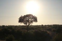 Uma árvore que recebe a luz do sol Imagem de Stock