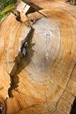 Uma árvore quebrada Foto de Stock