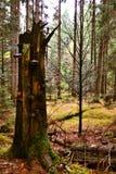 Uma árvore quebrada coberta com uma esponja Fotos de Stock Royalty Free
