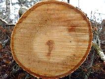 Uma árvore reduzida Fotos de Stock Royalty Free
