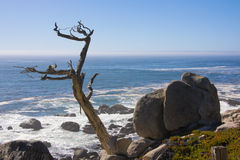 Uma árvore só Foto de Stock Royalty Free