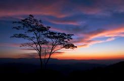 Uma árvore só Fotos de Stock Royalty Free