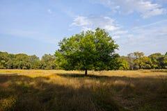 Uma árvore só Fotografia de Stock