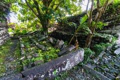 Uma árvore só dentro da peça central de Nan Madol Nandauwas: paredes, fotografia de stock
