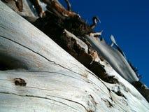 Uma árvore seca Fotografia de Stock