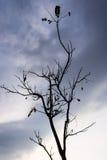 Uma árvore sem folhas, humor só Fotos de Stock