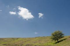 Uma árvore solitária Imagens de Stock