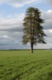 Uma árvore solitária em um campo de exploração agrícola. imagens de stock