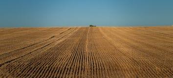 Uma árvore solitária no horizonte de um campo de trigo que fosse cortado foto de stock