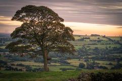 Uma árvore solitária no por do sol no parque nacional do distrito máximo imagem de stock
