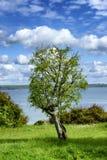 Uma árvore solitário contra o mar imagens de stock