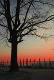 Uma árvore, um por do sol Fotos de Stock Royalty Free