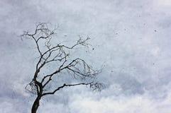 Uma árvore velha com folhas frondosas contra um céu nebuloso fotos de stock