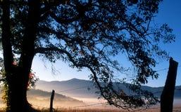 Uma árvore velha molda a névoa que encontra-se nos campos. Imagens de Stock