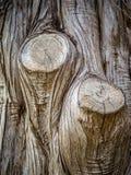 Uma árvore velha no lago Texoma, Texas fotografia de stock royalty free