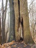 Uma árvore vista através de uma árvore foto de stock
