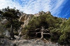 Uma árvore viva contra o contexto das montanhas da costa Fotografia de Stock