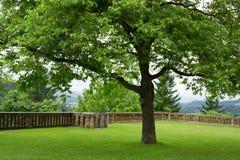 Uma única árvore Foto de Stock Royalty Free