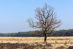 Uma única árvore desencapada durante a mola que está em uma amarração Fotos de Stock Royalty Free