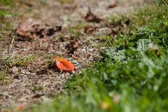Uma única folha alaranjada por muito tempo um trajeto da montanha na queda fotos de stock royalty free