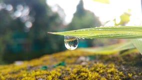 Uma única gota da água de chuva Fotografia de Stock Royalty Free