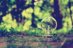 Uma única lâmpada na floresta Fotografia de Stock