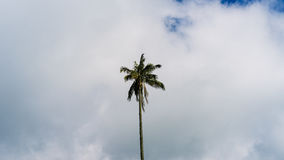 Uma única palmeira imagens de stock