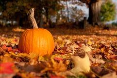 Uma abóbora nas folhas de outono Fotos de Stock