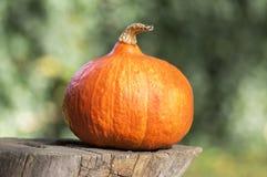 Uma abóbora no coto de madeira Fotografia de Stock Royalty Free