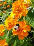 Uma abelha pequena fotos de stock