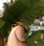Uma abelha que senta-se em um dedo imagem de stock royalty free